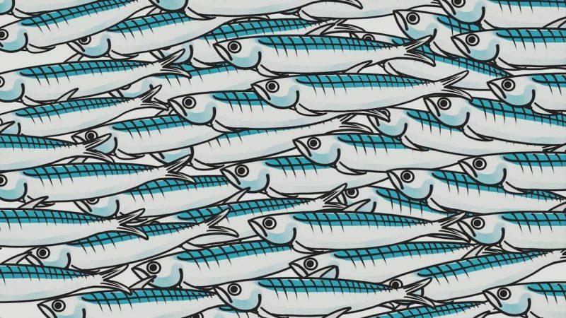 il futuro delle sardine
