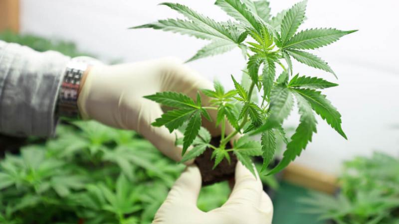 Necessità di legalizzare, non di proibire